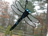 Stained glass dragonfly in electric blue glass