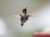 44birds2011