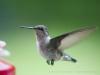49birds2011-post